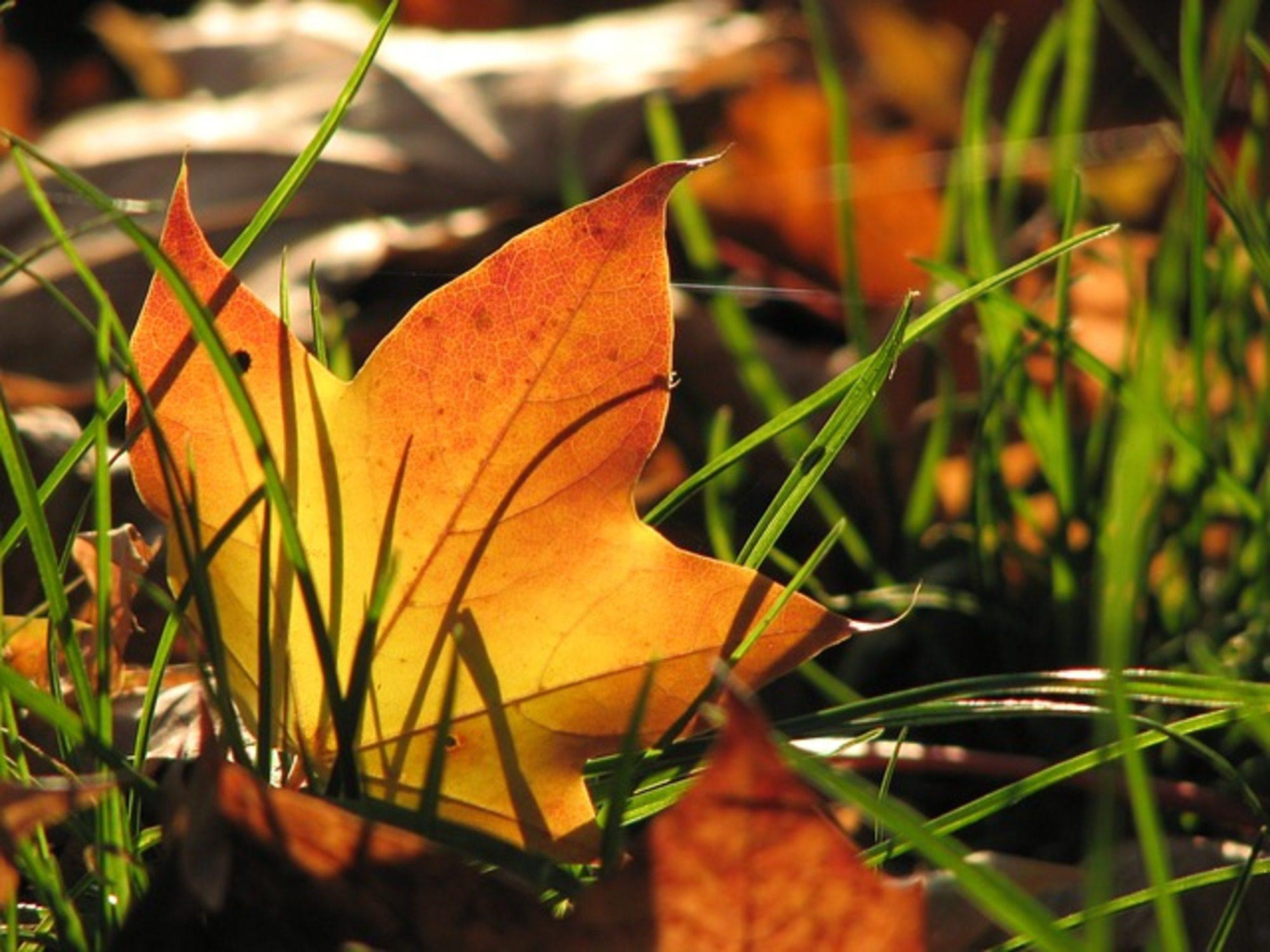 Egészséges őszi szépség