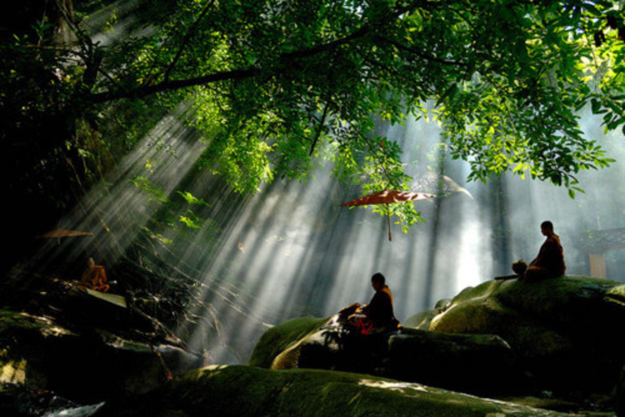Mankók a spirituális fejlődés újtán