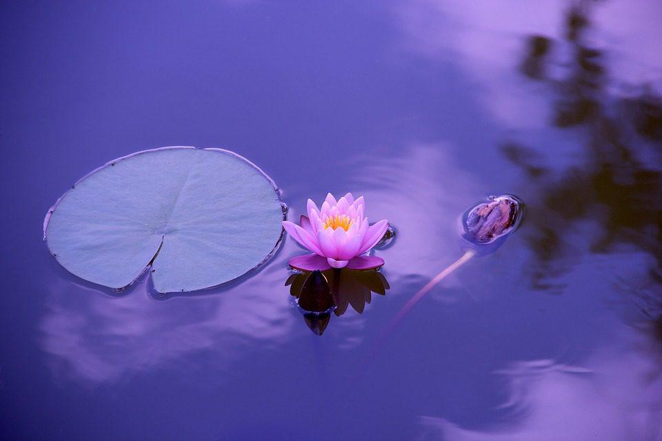 lotusz-med