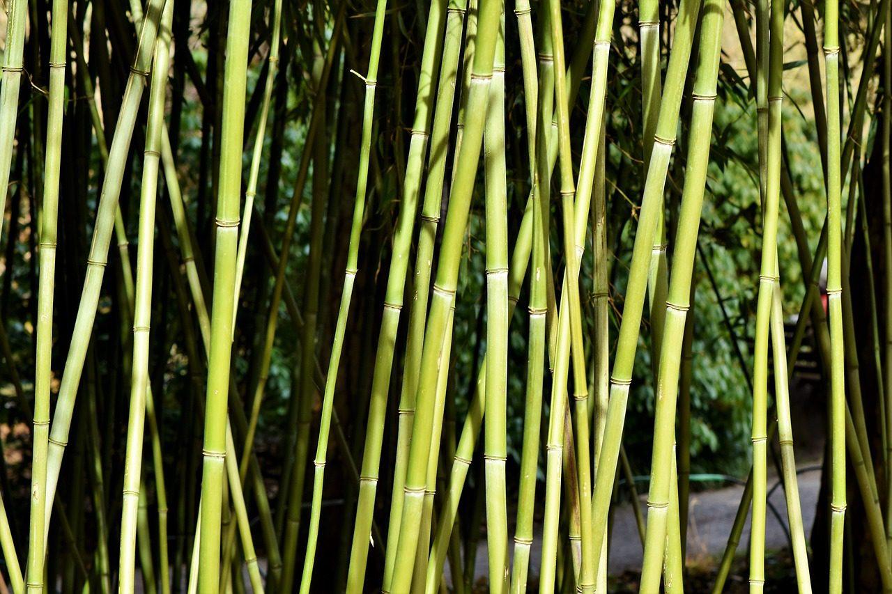 Igyunk a Föld és önmagunk egészségére! – A bambuszpohárról pro és kontra