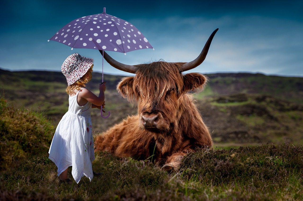 A nem-ártás elve és a környezetvédelem