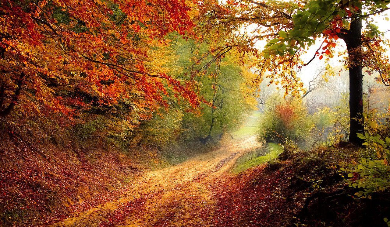 Megjelent a Jóga Útja magazin őszi száma!