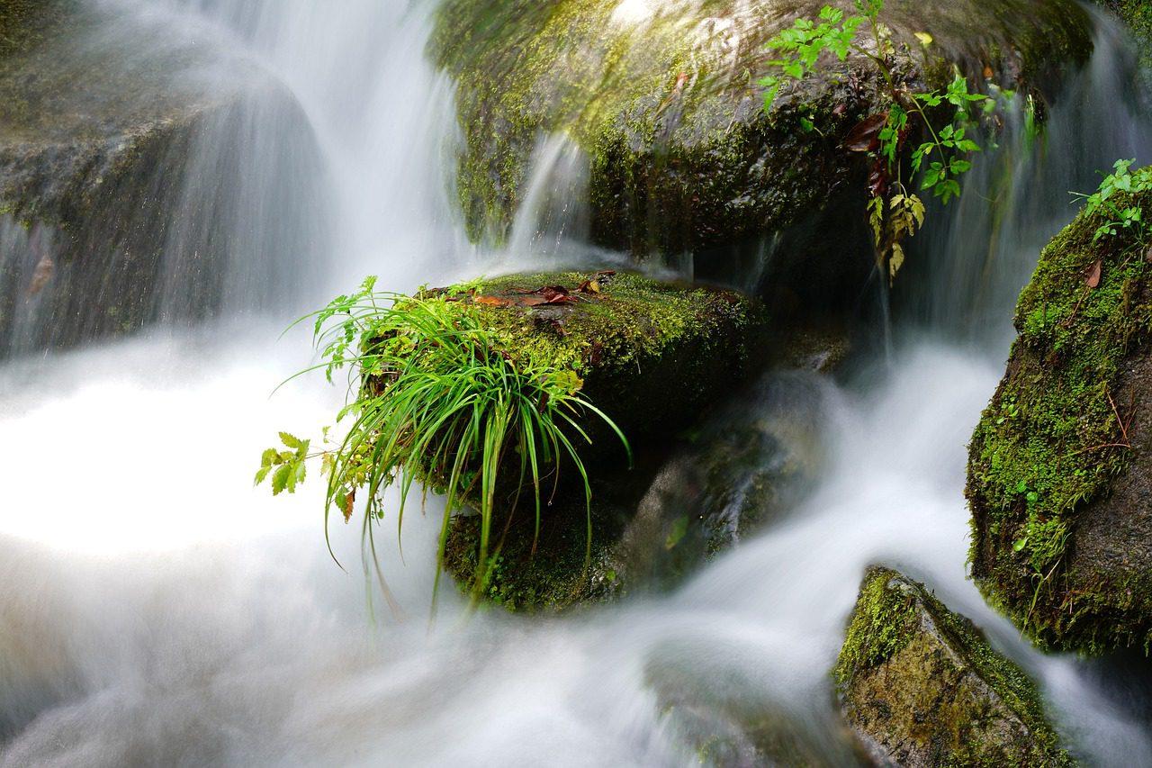 A tisztaság azt is jelenti, hogy óvjuk a környezetünket