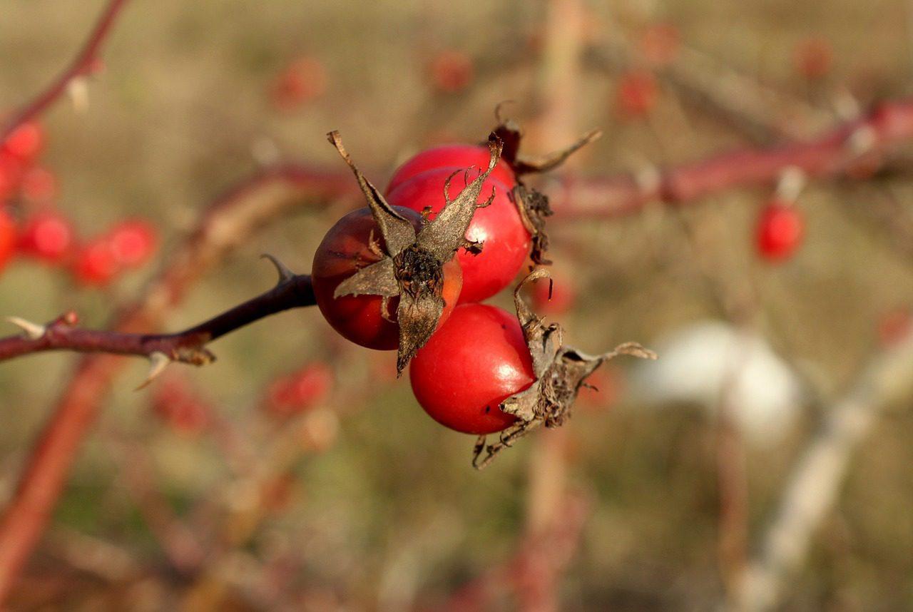 Egy egyszerű gyógynövény, ami segít a megelőzésben járvány idején